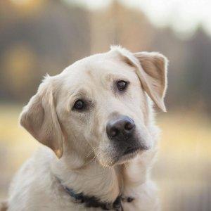 К чему снится мертвая собака: толкование по сонникам