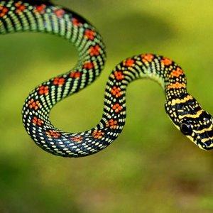 Сонник дерущиеся змеи