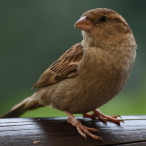 Сонник к чему снятся птицы в доме