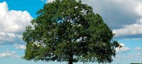 What dreams of repairs in the apartment house: the interpretation of the dream book