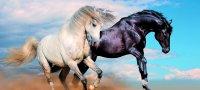 Совместимость женщины и мужчины Лошадей в отношениях