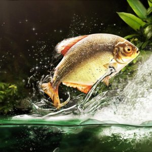 К чему снится красная рыба женщине и мужчине сонник толкование сна