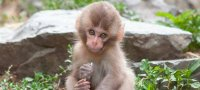 What years belong to the sign of the zodiac Monkey, the characteristics of people born in them