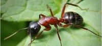 К чему снятся муравьи: толкование образа по различным сонникам