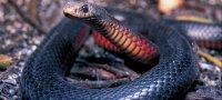 К чему снится черная змея: толкование образа по известным сонникам