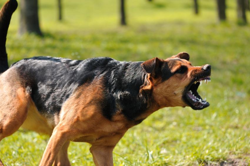 К чему снится большая собака: девушке, женщине или мужчине, толкование по сонникам Ванги или Миллера