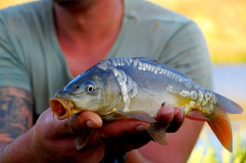 Сонник ловить рыбу руками мужчине