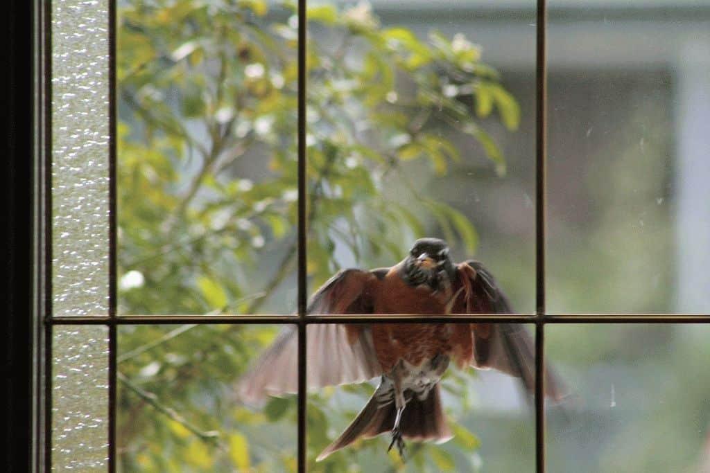 Птица ударилась в окно и улетела — что означает примета
