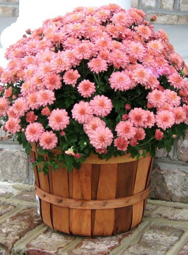 What kind of home flowers bring happiness and well-being to the house